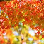 秋分の日とはいつ?決め方はある?祝日の理由や意味と「彼岸」の由来も!