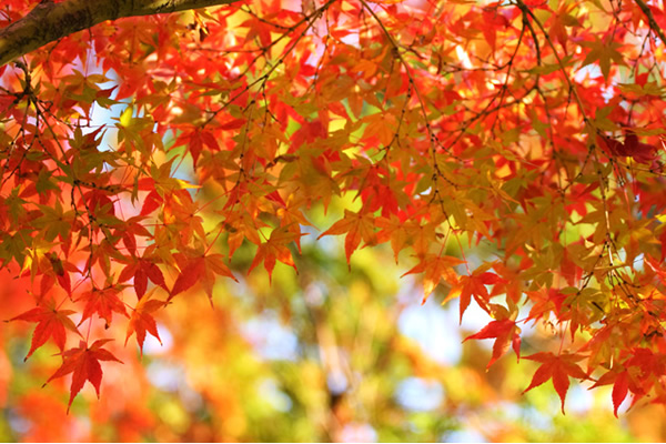 秋分 の 日 意味