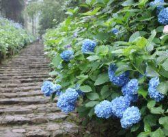 紫陽花 花 言葉 青